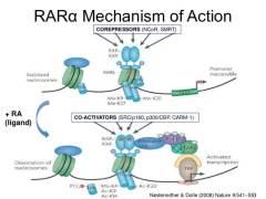 13 Benefits of Retinoic Acid Receptors (RARs) - Leaky gut, Autoimmunity, & Metabolism