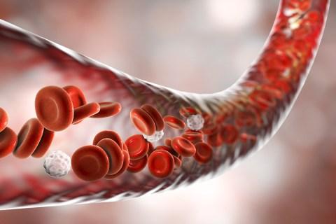 Blood vessel with flowing blood cells, 3D illustration