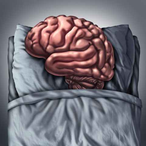 Sleeping brain