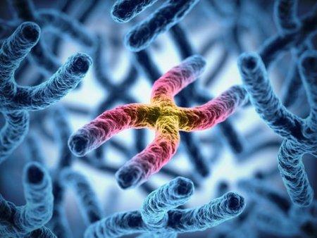 genes_300433304