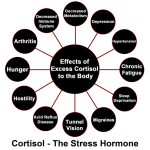3693---cortisol