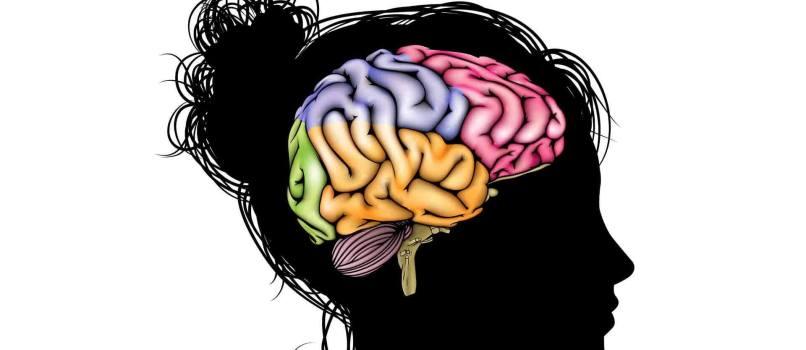 girl brain