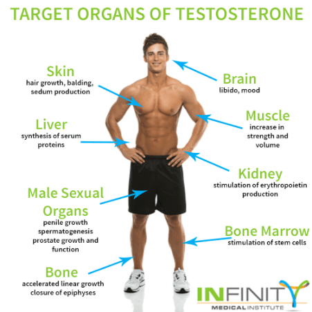 Image result for testosterone