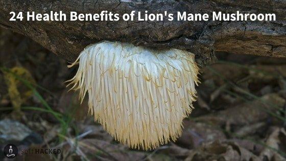 Super 24 Health Benefits Of Lions Mane Hericium Erinaceus Selfhacked Short Hairstyles Gunalazisus