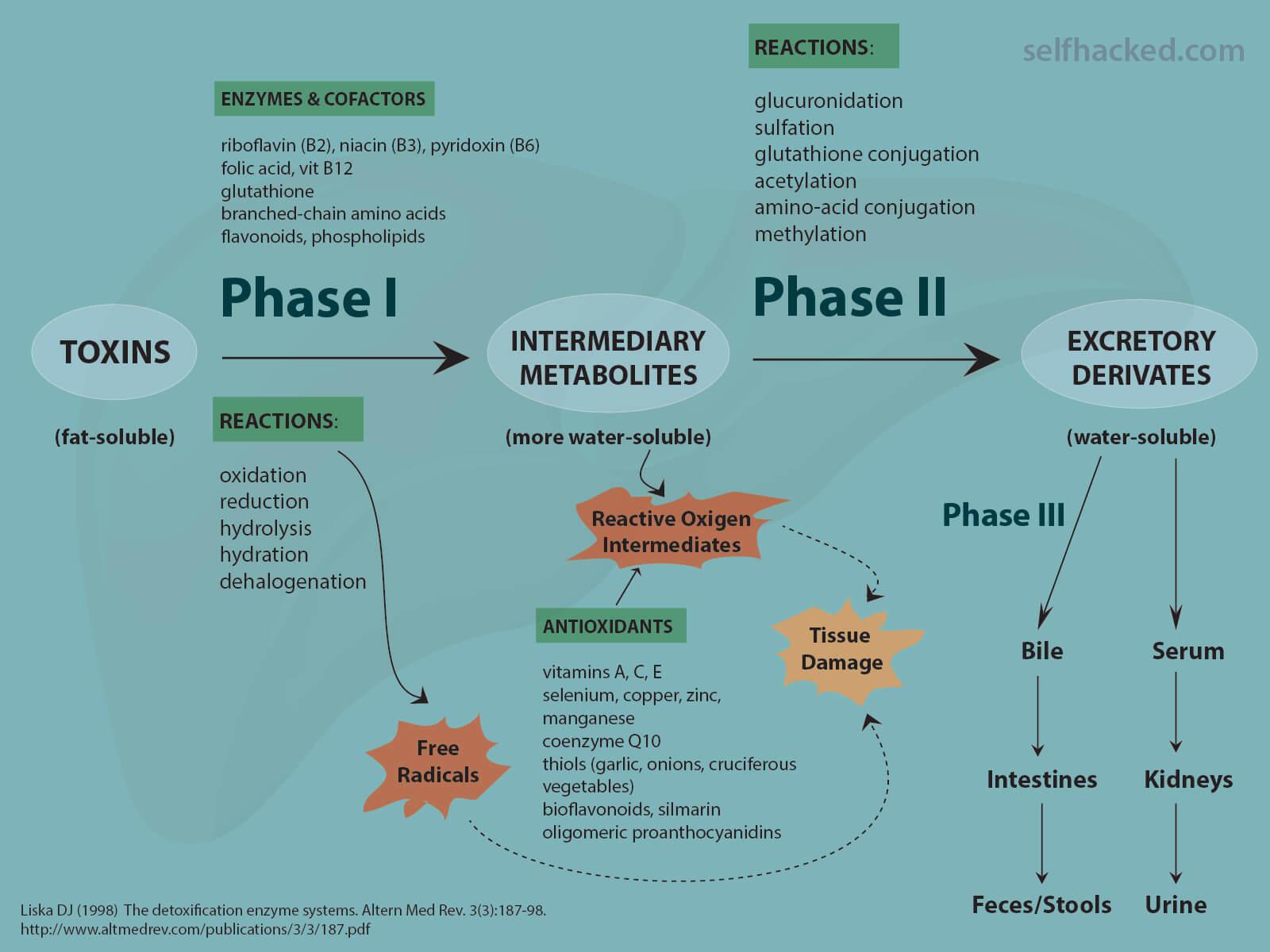 drug metabolism in diseases ebook