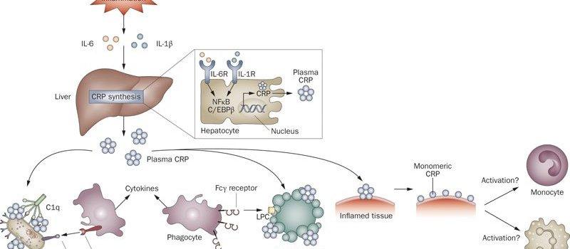 crp_mechanism