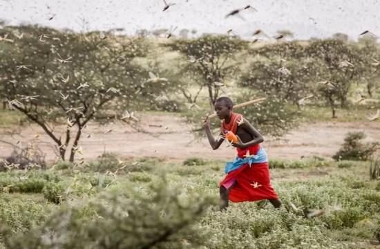 RESPONDING TO EAST AFRICA'S LOCUST INVASION