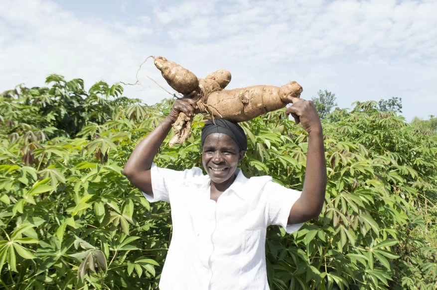 Damaris with cassava on her head