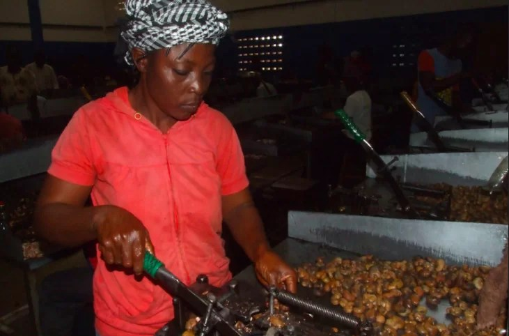 Cashew processing in West Africa