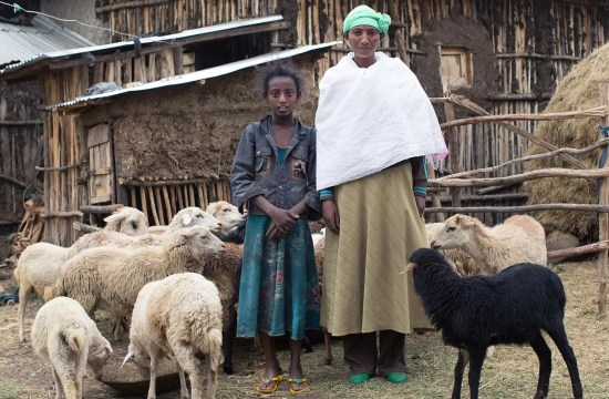 MOTHER EARNS MORE FROM IMPROVED LIVESTOCK