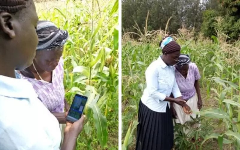 Rosalind and Emiliana inspecting maize using an app.