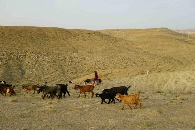 On the shepherd highway, Uzbekistan