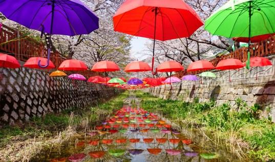 Jinhae Cherry Blossom Festival.