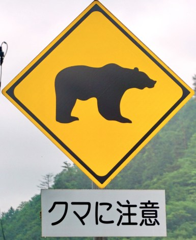 There are bears in Japan!