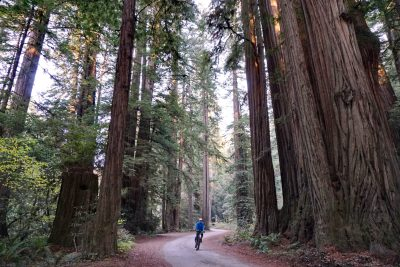 Riding through the coastal redwoods at Stout Grove
