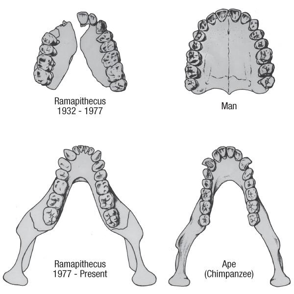 Ramapithacus
