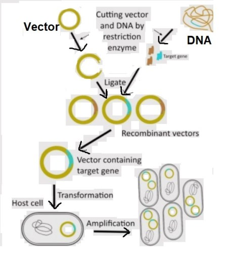 DNA recombinant