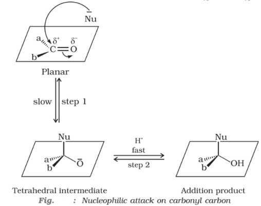 Nucleophilic attack on carbonyl carbon