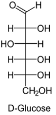 Open chain structure(Fisher model): D-Glucose
