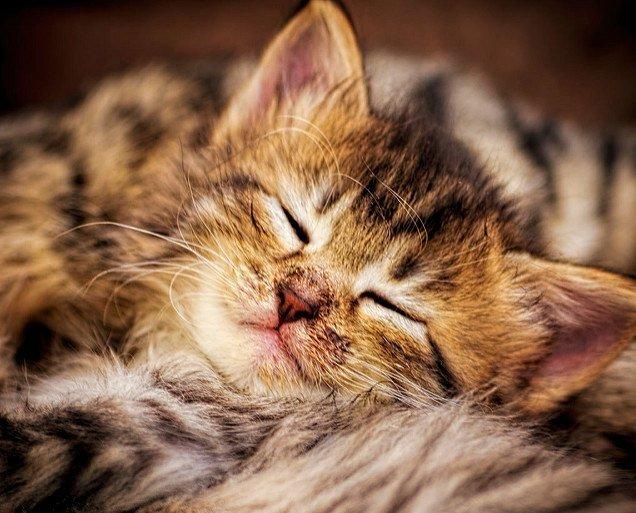 Real sleeping kitten. Photo by: Mike Sinko