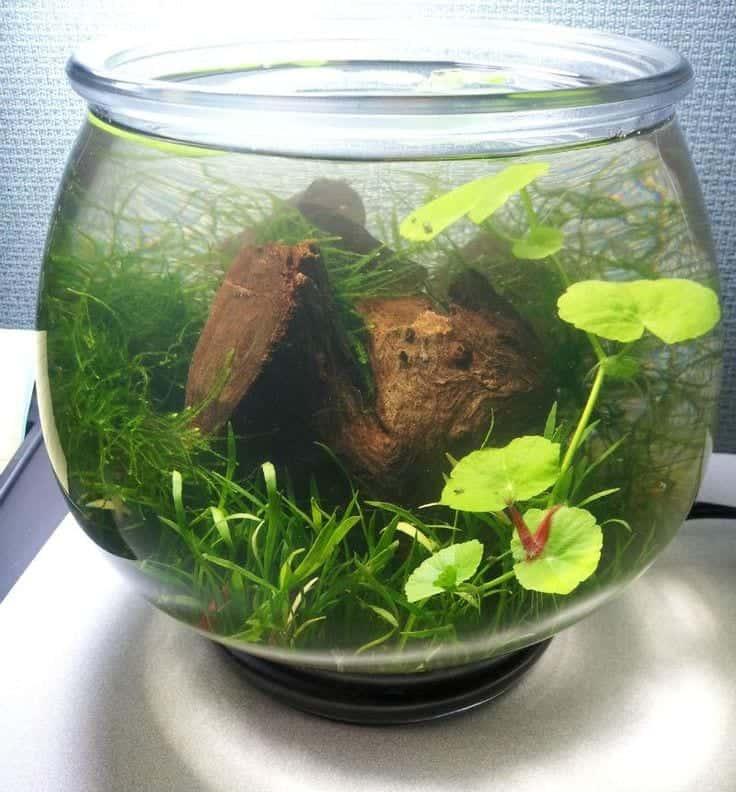 aquarium jarrarium aquascape