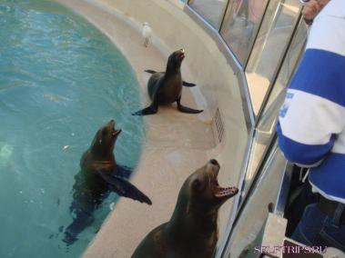 Seals. SeaWorld. San Diego