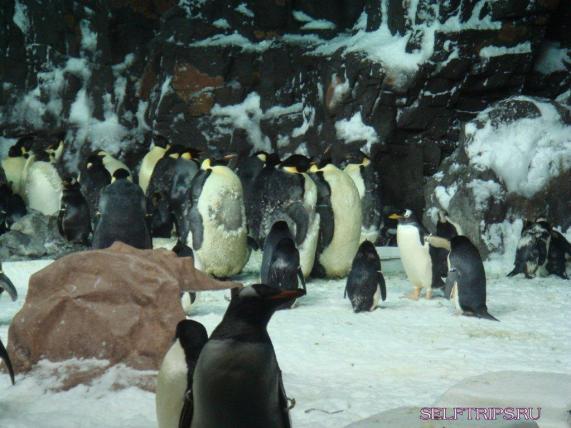 Penguins. SeaWorld. San Diego