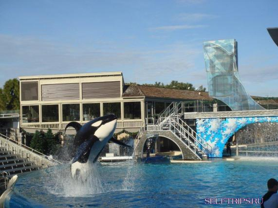 Show of whales. SeaWorld