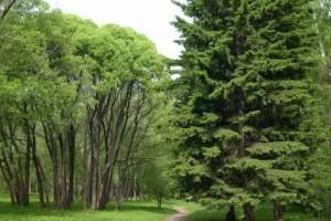 Central Siberian Botanical garden