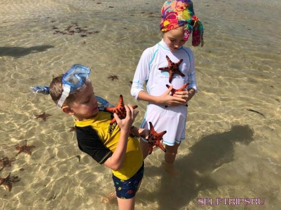 Пляж с морскими звездами
