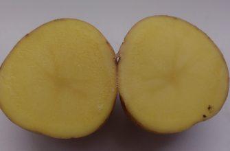 Режем картошку для посадки