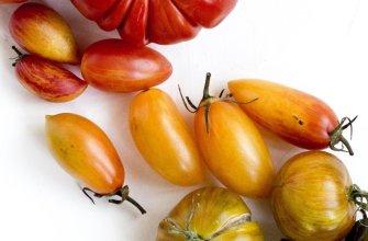 Полосатые томаты
