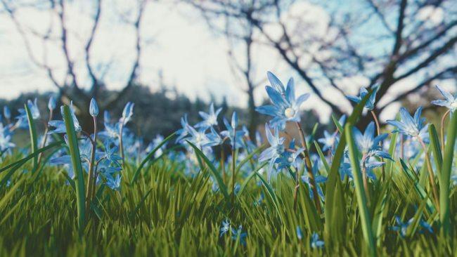 Весенняя цветочная поляна