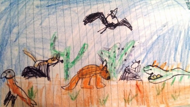 This is a picture of Mexican wildlife. The animals are Iguana, Armadillo, mexican birds, tarantulas and other wildlife