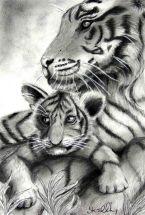 Tigers web