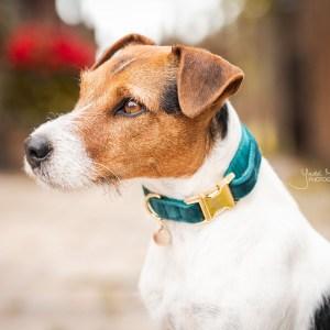 Collier chien Velvet Emeraude Kentucky Horsewear Dogwear