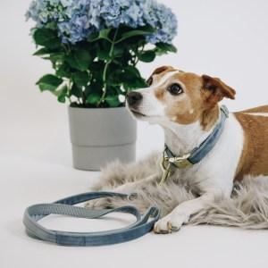 Laisse Chien Velvet Bleu Ciel 120cm Kentucky Horsewear Dogwear