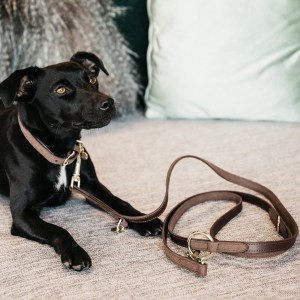 Laisse Chien Leather Velvet Marron Kentucky Horsewear Dogwear