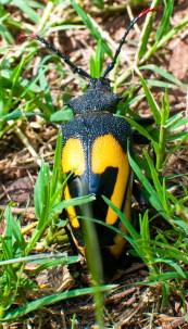 Un insecte énorme