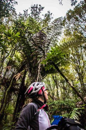 Te Ara Ahi, Thermal by bike
