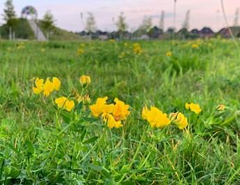 Blumen im Auenpark Selm