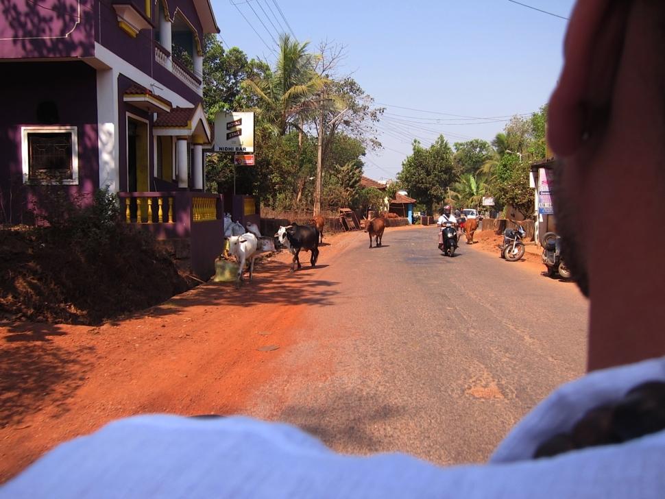 Foto vanaf een brommer in Goa.
