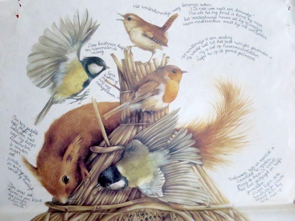 Foto bij bericht over mijn vogelmuseum (fragment van een door Marjolein Bastin getekende poster)