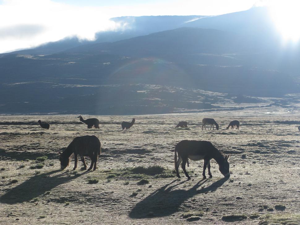 Foto van de Boliviaanse altiplano, vlak voor de honden kwamen.