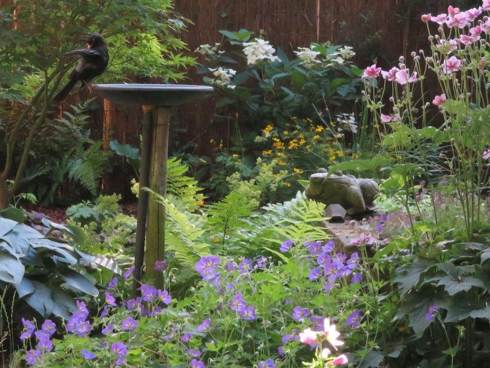 Tuinier Kers legt een merel vast in haar tuin.