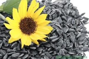 semena podsolnyxa