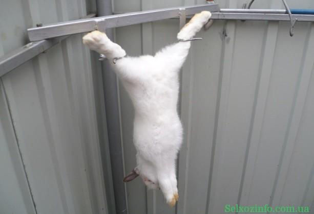 забой кроликов в домашних условиях