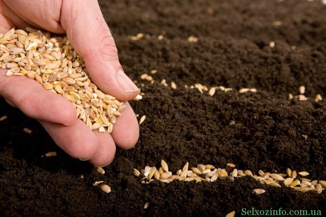 Как правильно подготовить семена