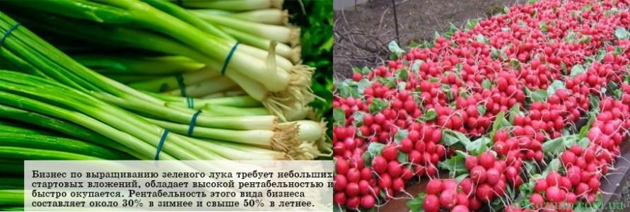 бизнес на выращивании лука и редиса
