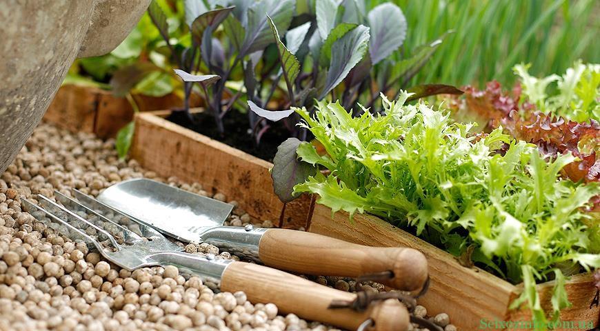 Выращивание семян на рассаду самостоятельно